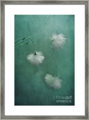 Sleepy Heads Framed Print by Priska Wettstein