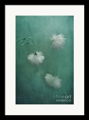 Seedhead Framed Prints
