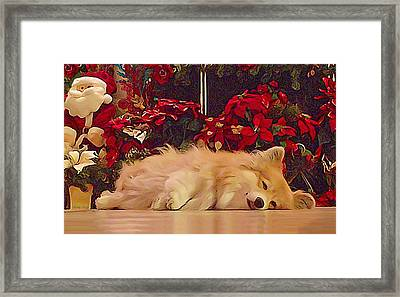 Framed Print featuring the photograph Sleepy Holiday Corgi Surrounded By Poinsettias. by Kathy Kelly