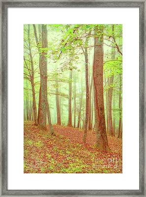 Sleepy Hollow Framed Print