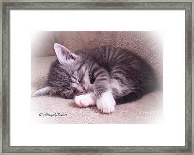 Sleepy Kitten Bymaryleeparker Framed Print