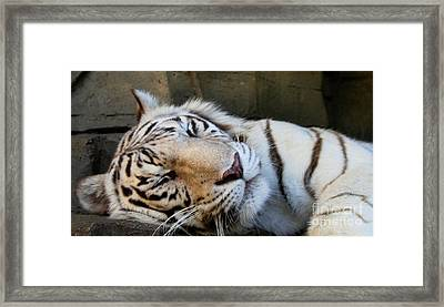 Sleepy Kitty Framed Print