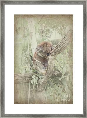 Sleepy Koala Framed Print