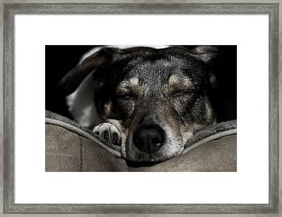 Sleepy Lil Hound Framed Print