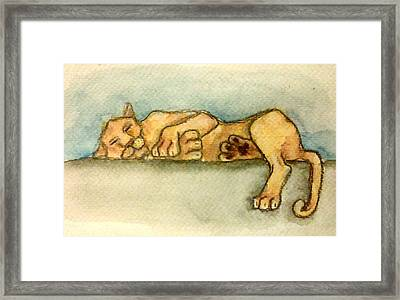 Sleepy Lion Framed Print by Jennie Hallbrown