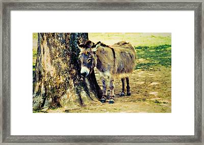Sleepy Sardarian II Framed Print by Jan Amiss Photography