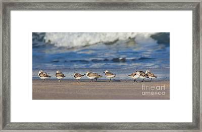 Framed Print featuring the photograph Sleepy Shorebirds by Michelle Wiarda