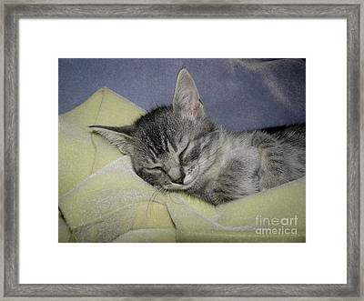 Sleepy Time Framed Print