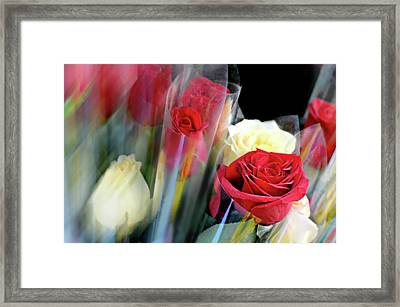 Sleeves Of  Red Roses Framed Print by Diana Angstadt