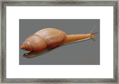 Slender Snail Framed Print by DigiArt Diaries by Vicky B Fuller