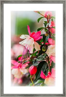 Slice Of Asian Garden Framed Print