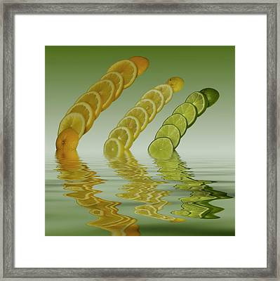 Framed Print featuring the photograph Slices  Grapefruit Lemon Lime Citrus Fruit by David French