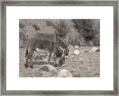 Slim Pickin's, Monochrome Framed Print by Gordon Beck