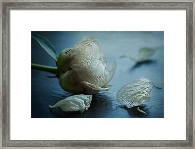 Slipped Away Framed Print by Maggie Terlecki