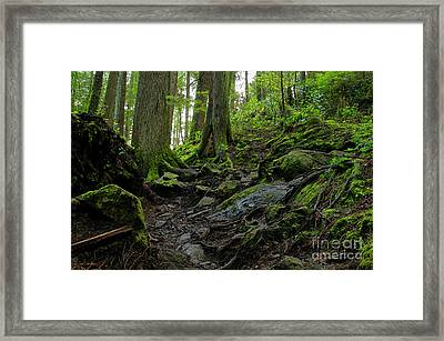 Framed Print featuring the photograph Slippery When Wet by Sharon Talson