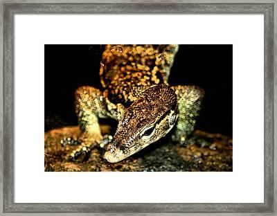Slither Framed Print by Karen M Scovill