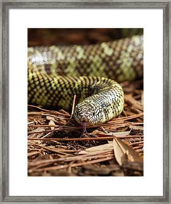 Slither Snake Framed Print
