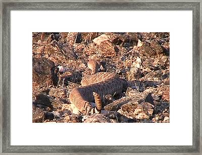 Slithering Away With Tail Held High Framed Print