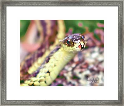 Framed Print featuring the photograph Slithering Snake With Forked Tongue by Debbie Stahre