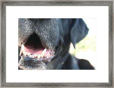 Slobber Time Framed Print by Eliza Runion