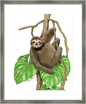 Hanging Three Toe Sloth  Framed Print