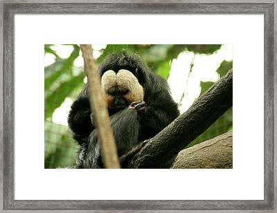 Sloth Framed Print by ShadowWalker RavenEyes Dibler