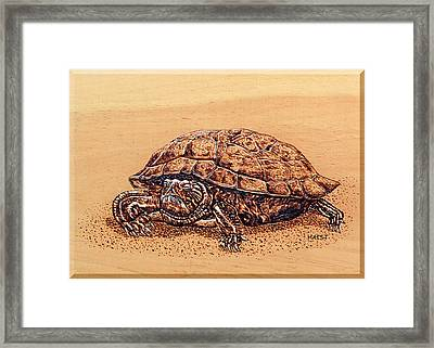 Slow But Sure Wins The Race Framed Print by Ron Haist