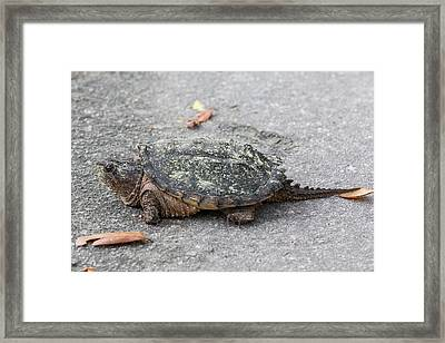 Slow Crossing 3 March 2018 Framed Print