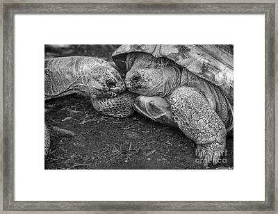 Slow Kiss Framed Print by Jamie Pham