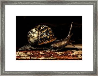 Slow Mover Framed Print