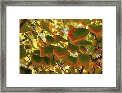 Slowly Changing Dimension - Hot Vibrant Leaf Edges Celebrating The Arrival Of Autumn Framed Print