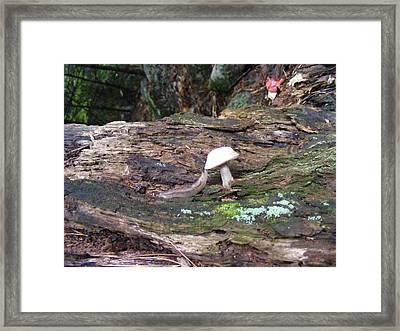 Slug And Mushroom Framed Print by Alison Heckard