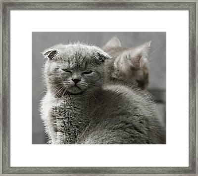 Slumbering Cat Framed Print by Evgeniy Lankin