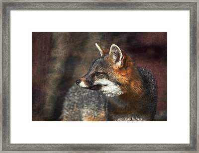Sly As A Fox Framed Print by Karol Livote