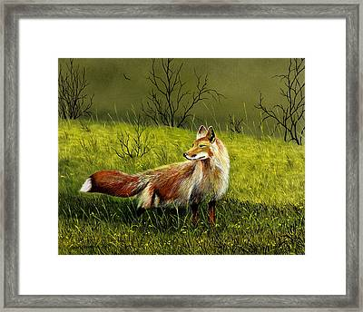 Sly Fox Framed Print by Don Griffiths