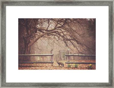 Sly Guy Framed Print by Carrie Ann Grippo-Pike