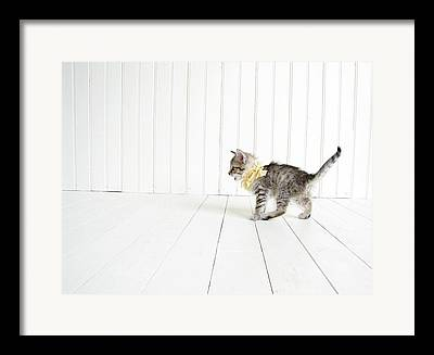 Silver Tabby Framed Prints