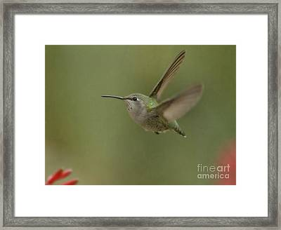 Small And Mighty  Framed Print