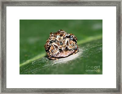 Small Bird-dropping Spider Framed Print