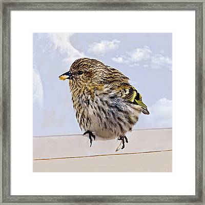 Small Bird Eating Seed Framed Print by Susan Leggett
