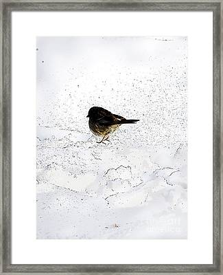 Small Bird On Snow Framed Print
