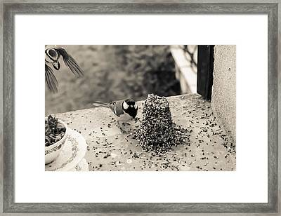 Small Birds Eating Framed Print by Georgia Fowler