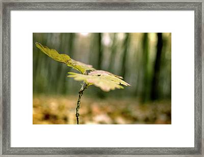 Small Branch With Yellow Leafs Close-up Framed Print by Vlad Baciu