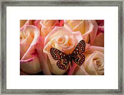 Small Butterfly On Pink Roses Framed Print