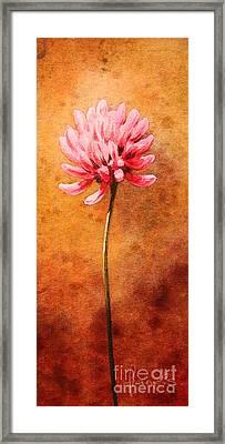 Small Clover Framed Print