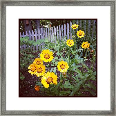 Small Yellow Daisies Framed Print