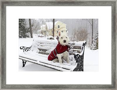 Small Dog Park Bench Snow Storm Framed Print