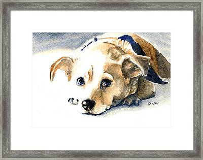 Small Dog With Tan Short Hair  Framed Print