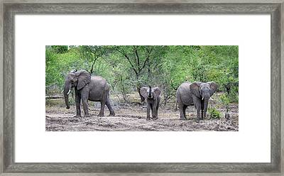 Small Ellie In The Middle Framed Print by Jennifer Ludlum