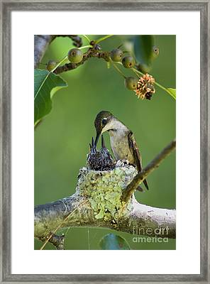 Framed Print featuring the photograph Small Family - D009336 by Daniel Dempster